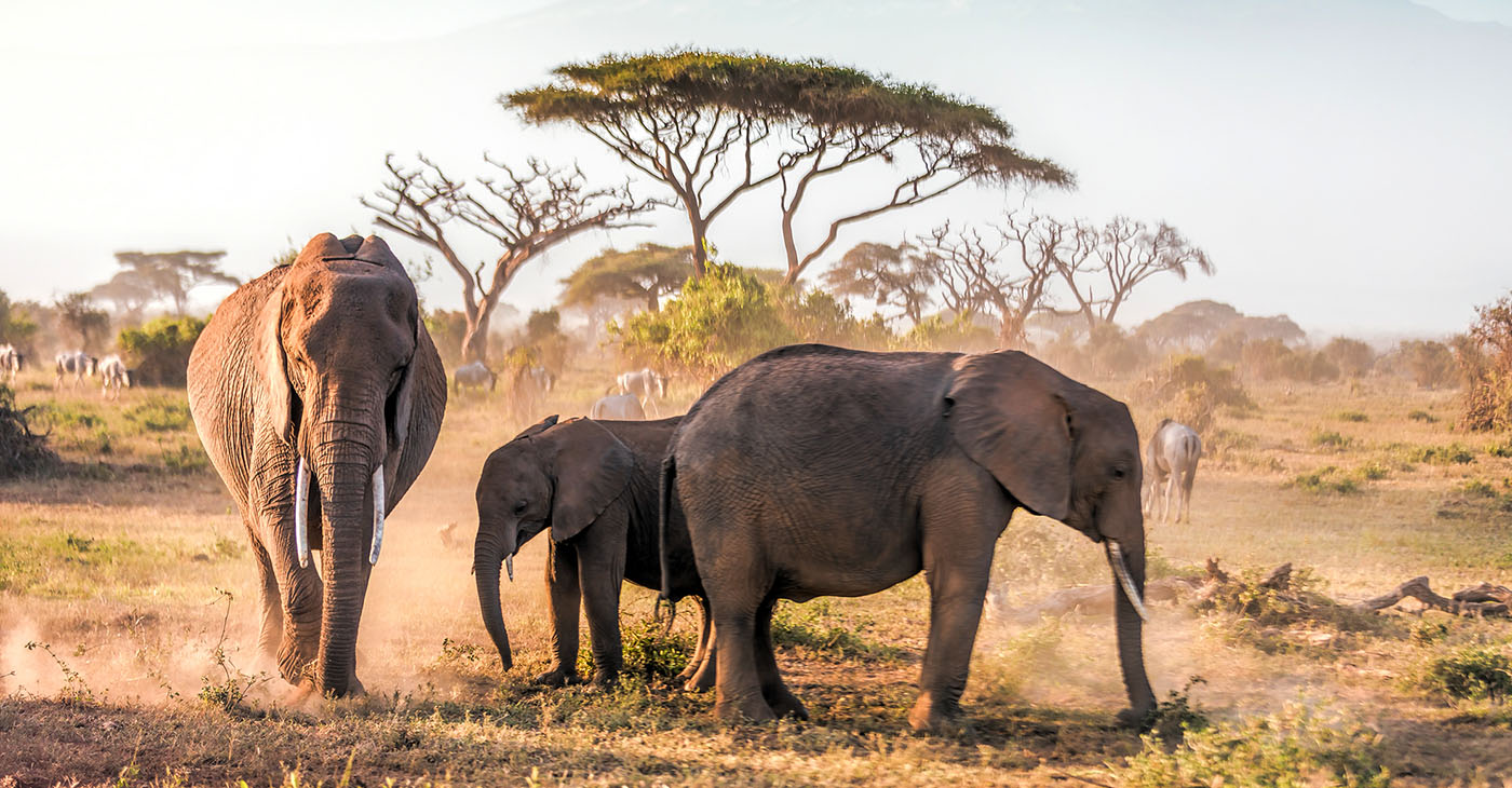 Unavoidable in Kenya's capital city is the famed African safaris – after all, the city lays claim as the continent's safari capital.